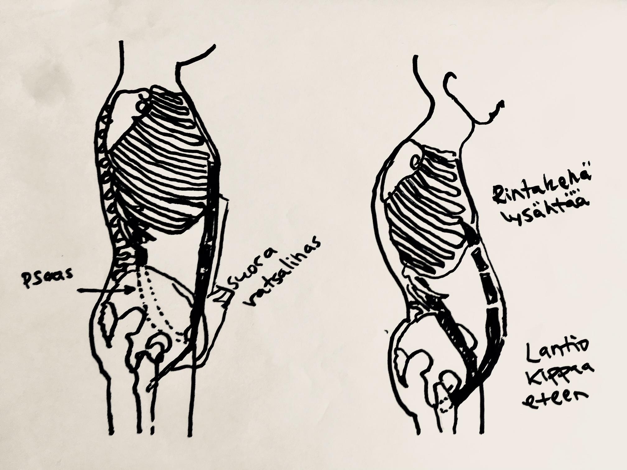 vatsalihasharjoittelussa virheitä tekee helposti. Voi johtaa huonoon ryhtiin.